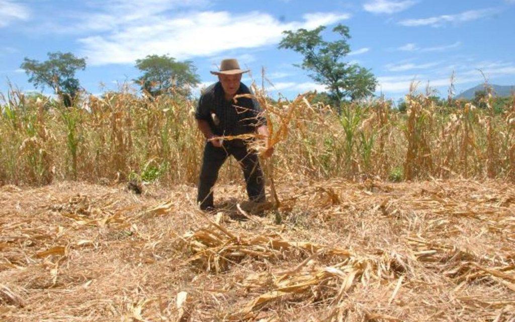"""Sequía mata cultivos y de hambre a miles de familias<span class=""""wtr-time-wrap after-title"""">Lectura de <span class=""""wtr-time-number"""">3</span> min.</span>"""